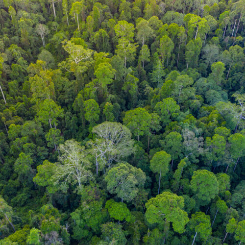 Aerial,Drone,Image,Of,Beautiful,Deep,Green,Rainforest,Jungle,Of